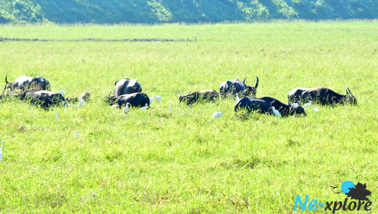 Wildlife Majuli