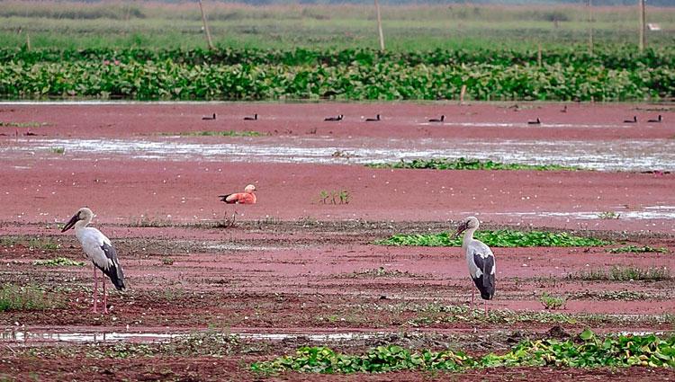 Bird watching Assam