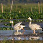 Assam – Through the Lens of a Birdwatcher