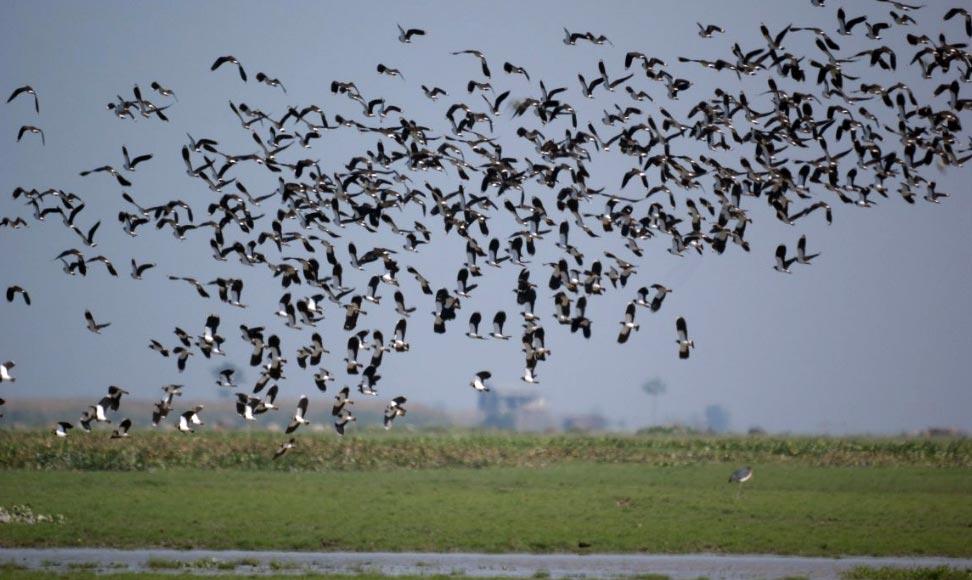 Pani Dihing Wildlife Sanctuary