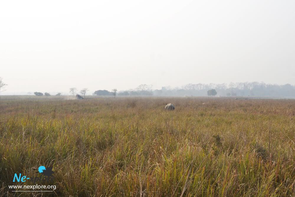 Rhino at Pobitora