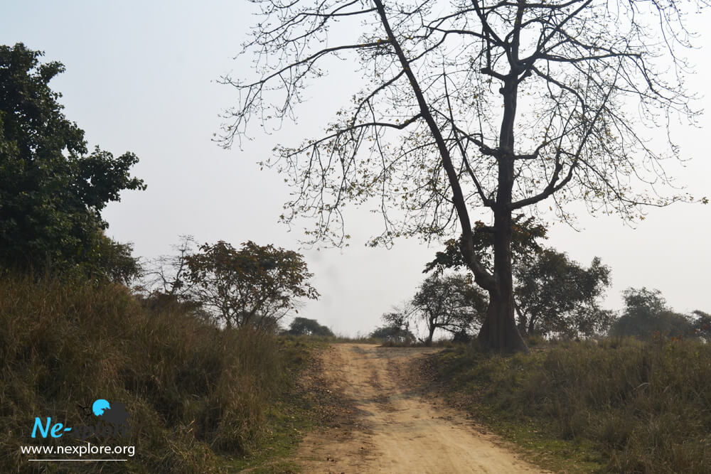 pobitora wildlife sanctuary safari